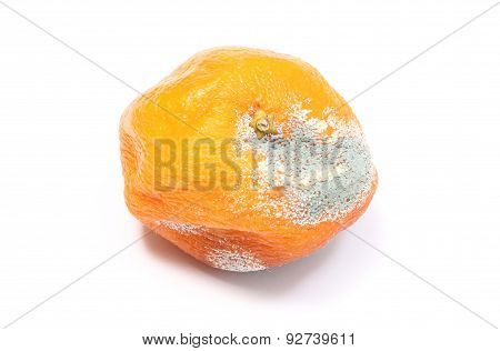 Moldy Mandarine On White Background