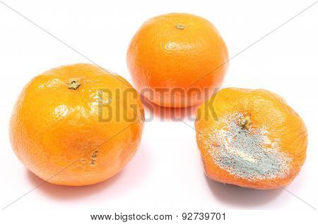 Fresh And Moldy Mandarins On White Background