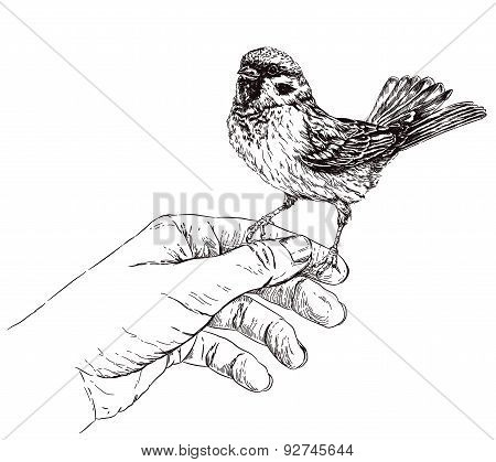 Sparrow sitting on hand. Vector illustration isolated on white