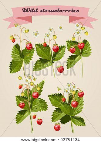 Set Of Wild Strawberries