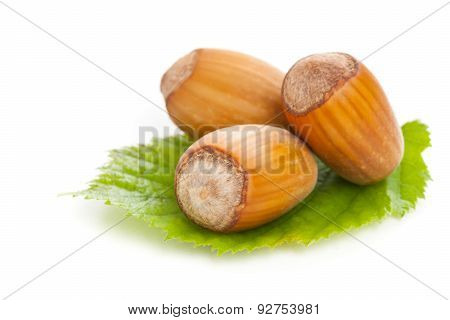 Hazelnuts With Hazelnut Leaf On White Background