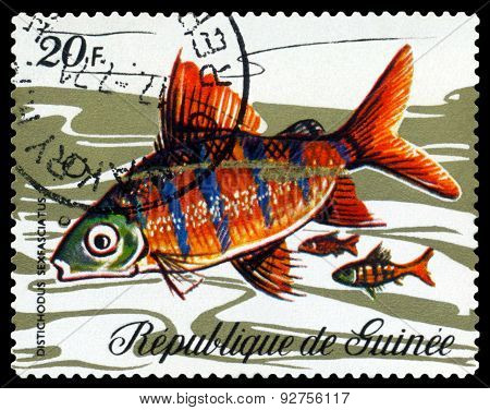 Vintage  Postage Stamp. Fish Distichodus Sexfasciatus.