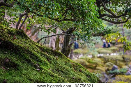 Moss covered ground