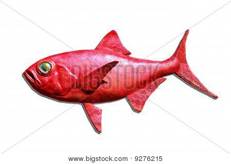 Red fish isolated