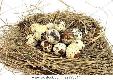 Big Quail Nest