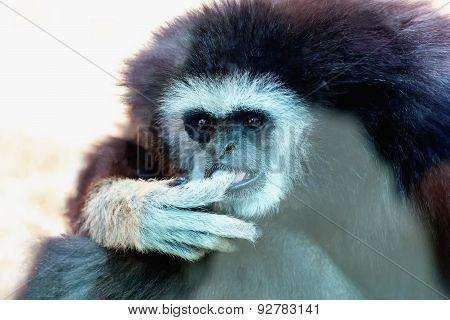 Closeup Of Monkey In Zoo