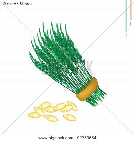 Acacia Pennata With Vitamin A And Minerals