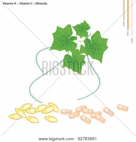 Ivy Gourd Leaves With Vitamin A And C