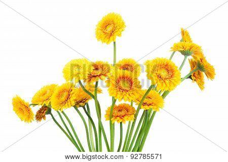 Bouquet of gerber flowers in the vase