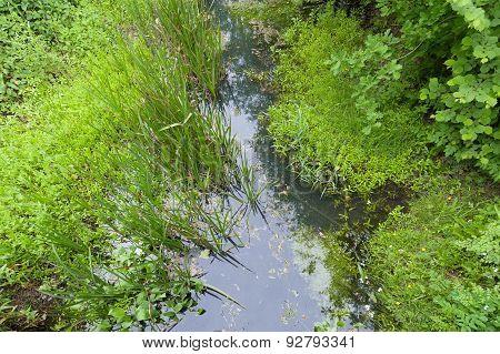 Creek Vegetation