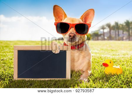 Chihuahua At The Park