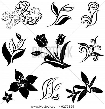 Vector set of flower design elements