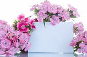 stock photo of carnation  - bright bouquet of carnations on a white background - JPG