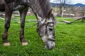 stock photo of  horse  - Horses in the countryside - JPG
