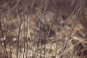 picture of dry grass  - Autumn dry grass - JPG
