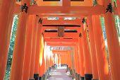 picture of inari  - Iconic Fushimi Inari Shrine gate Kyoto Japan - JPG