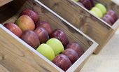pic of wooden crate  - Red and golden delicious apples arranged in wooden crates over white background - JPG