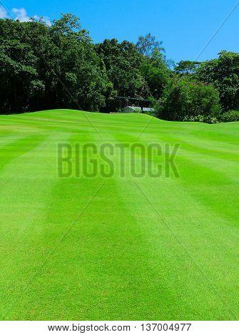 Landscape Fairway Fields