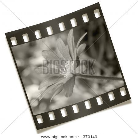 Filmstrip Flower Negative Photography
