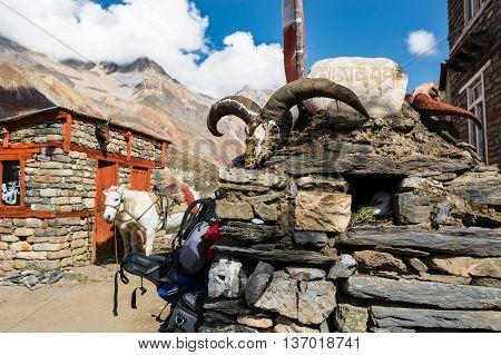 Yak skull on a stone pile. Tibetan animistic tradition.