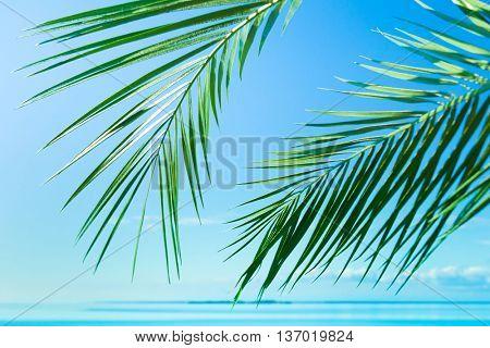 Sea Scene Palm