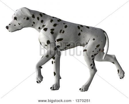 Dalmatiner - 06
