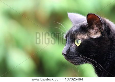 side profile of a black cat outdoors