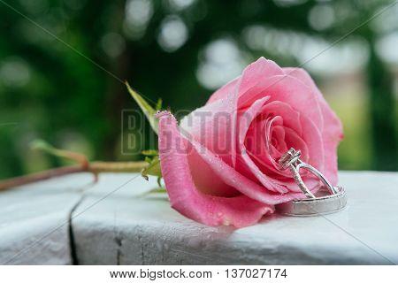 Set of wedding rings in pik rose taken closeup with water drops