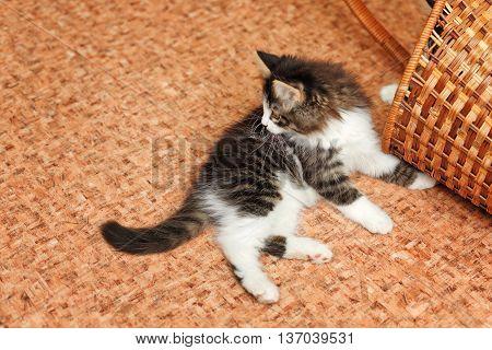 Cute little pet kitten and a basket on the floor.