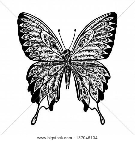 Vector butterfly. Black and white butterfly. Butterfly Papilio blumei.