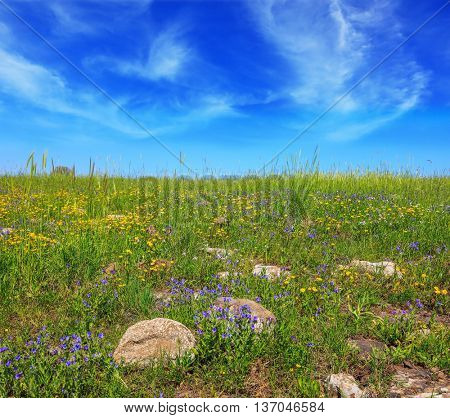 Picturesque carpet of spring flowers and fresh grass. Israel. The legendary Golan heights in a fine sunny day