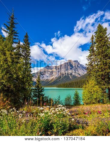 Solar cool morning in Rocky Mountains. Blossoming glade in the forest on Emerald Lake. Yoho National Park