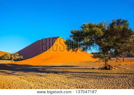 The most famous is  huge orange dune 45. Namib-Naukluft National Park.  Travel to Namibia