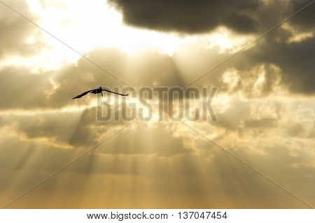 Bird silhouette is a single soul spreading it's wings soaring against an ethereal sun beam sky.