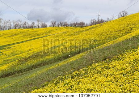 Mountain strewn with yellow flowers in spring day
