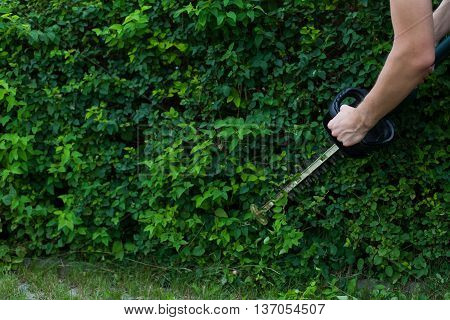 Man grooming a lush hedge using electric trimmer