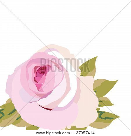 Watercolor pink Rose Flower isolated. Vintage Watercolor Blooming Roses. Vector Watercolor Rose for wedding invitation anniversary celebration events