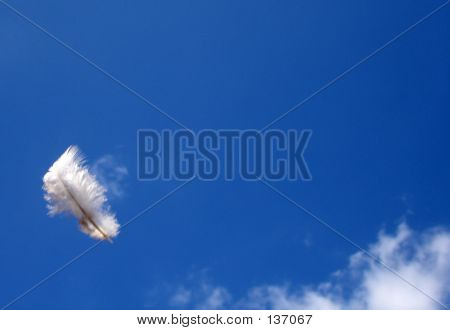 Feather Floating In Air