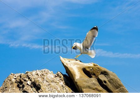 seagull fly to stone top