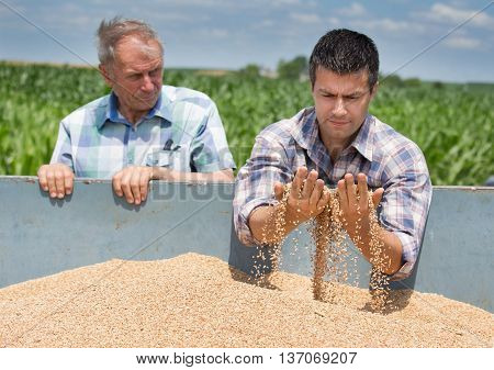 Farmers Looking At Wheat Grain