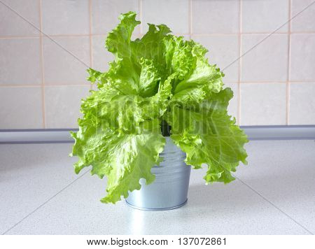 Lot of tasty green salad in gray metal pail in kitchen with beige tile on wall. Front view closeup