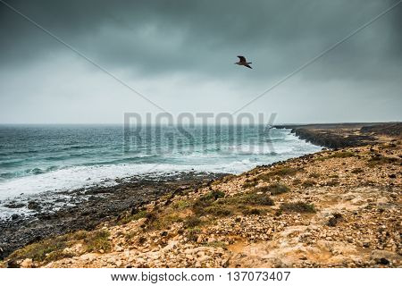 coastline in Lanzarote in gloomy weather with bird in the sky, Spain