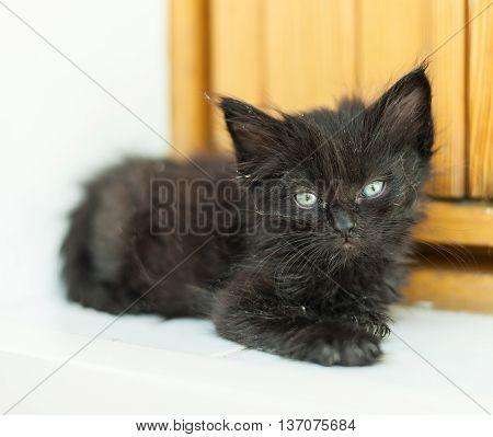 The dirty black kitten lying on the doorstep