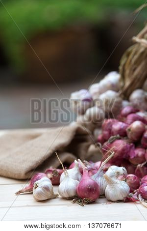 Shallots and garlic ,herb for healthy concept.