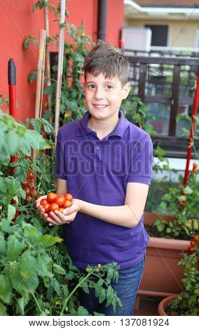 Guy In His Urban Garden With Red Tomatoes In Pot
