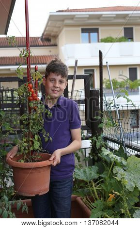 Child In Urban Garden With Tomatoes In The Plant Pot