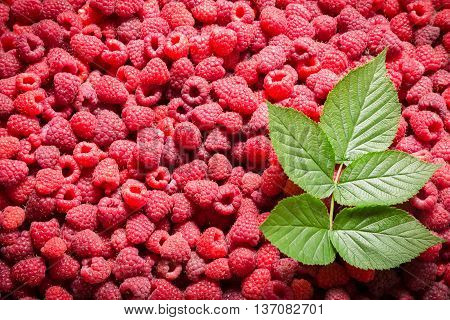 natural background with raspberry and green leaf