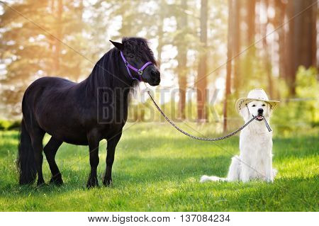 adorable dog in a cowboy hat holding pony on a leash