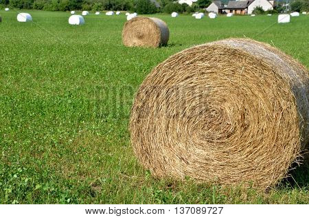 Rolls of hay on green field most of them wrapped in white foil