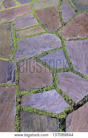 Garden stone path with grass close up